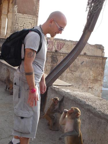 monkey directions