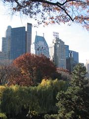 Willow guarding buildings (SaikoSakura) Tags: park nyc newyorkcity autumn ny newyork tree fall pinetree buildings centralpark mapletree weepingwillow essexhouse wallmanskatingrink