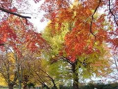青葉の森公園の紅葉