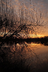 Branches and lake Sunrise (torimages) Tags: winter glastonbury somerset sd allrightsreserved flickrsbest donotusewithoutwrittenconsent copyrighttorimages