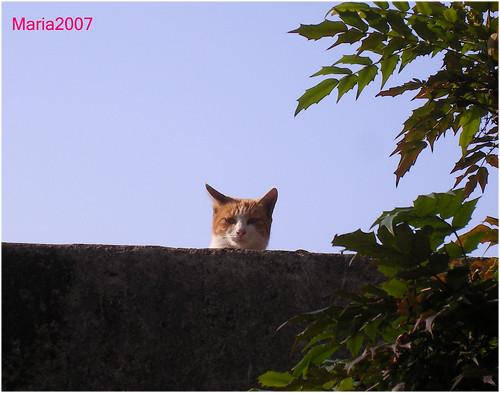 20071213peeping_cat