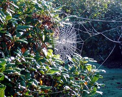 Spider Web (jc.winkler) Tags:
