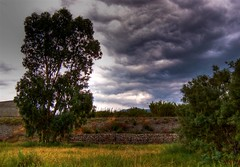 A storm is coming (Stefania Maria Livraghi) Tags: storm tree muro grass countryside country stormy campagna erba albero pioggia temporale tempesta supershot top20cloud instantfav abigfave anawesomeshot impressedbeauty superbmasterpiece treesubject betterthangood theperfectphotographer thegardenofzen
