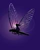 dragonfly 3 Me quiero hacer
