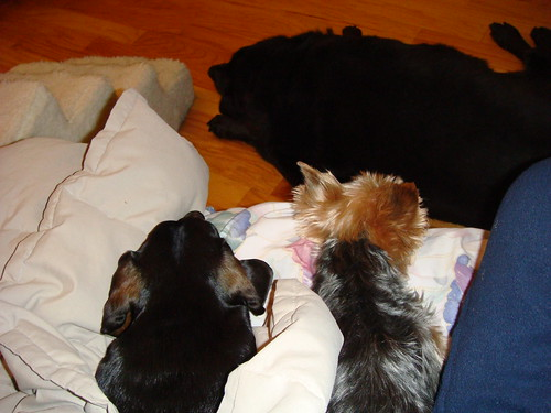 doggies at rest