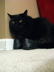 Huggy Bear trying on Jeni's shoes