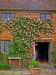 SISSINGHURST CASTLE GARDEN (AGA~mum) Tags: sissinghurst kent nt 200views walledgarden vitasackvillewest climbingrose leadedwindows sissinghurstcastlegarden gardentours mastergardeners thenationaltrust windowsbalconies thewhitegarden ntgreenplaces ukcotedazur2007 sirharoldnicolson gradeilistedbuildingsioe troughplanters castlefactsinfo