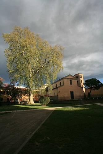 Tree, Ravenna