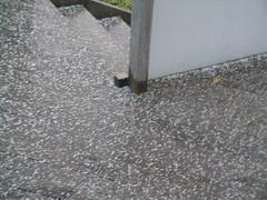 Hail in Dunedin