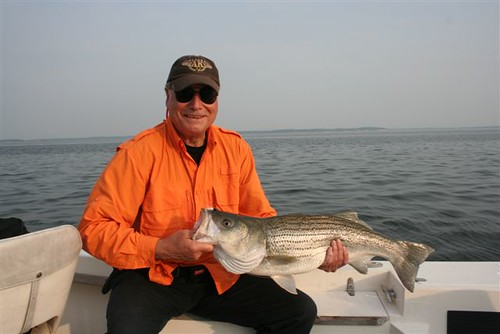 Backwater Angler regular Charlie Shelton with nice Rockfish!