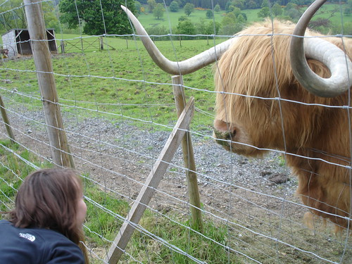 Kari goes tete-a-tete with Hamish the highland coo.