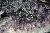 Amethyst geode (Serra Geral Formation, Lower Cretaceous; southeastern Brazil) 2 (James St. John) Tags: amethyst quartz silicate silicates mineral minerals brazil serra geral formation cretaceous geode geodes
