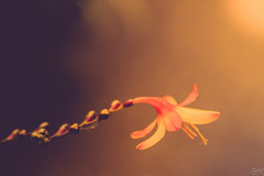 One is Lonely (Žèę Ķ) Tags: flower flowers spring yellow summer beautiful sunset color light red valentinesday valentine petal detail bow heart nature naturephotograph sun