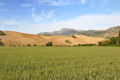 Paysage autour de Ronda. (teocaramel) Tags: landscape champs andalucia espana ronda agriculture paysage espagne soe andalousie bl agricole mywinners mywinner abigfave sheildofexcellence platinumphoto anawesomeshot theperfectphotographer goldstaraward