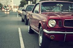St. Kilda Beach Mustang
