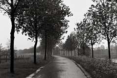 Raindance (bm^) Tags: trees white black tree nature rain landscape blackwhite bomen nikon belgium belgique zwartwit belgi natuur boom westvlaanderen lucht zwart wit regen landschap leie menin d90 jaagpad menen nikond90  westernflanders regenlucht
