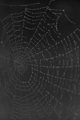 What a tangled web we weave....... (Moochin Photoman) Tags: belfast cobweb northernireland moochinphotoman