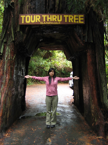 Tour Thru Tree in Klammath, CA