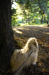The squirrel that got away (Charley Lhasa) Tags: nyc centralpark paws pick charley 0120 dogfair 0253 color:mode=2