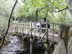 poohsticks bridge (zenitpetersburg) Tags: wood uk bridge forest hundred pooh 100 winnie acre ashdown poohsticks