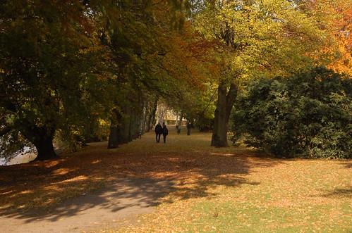A park in Malmo