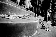 One step ahead (mgratzer) Tags: blackandwhite bw white black bird london feet stair steps showonmysite