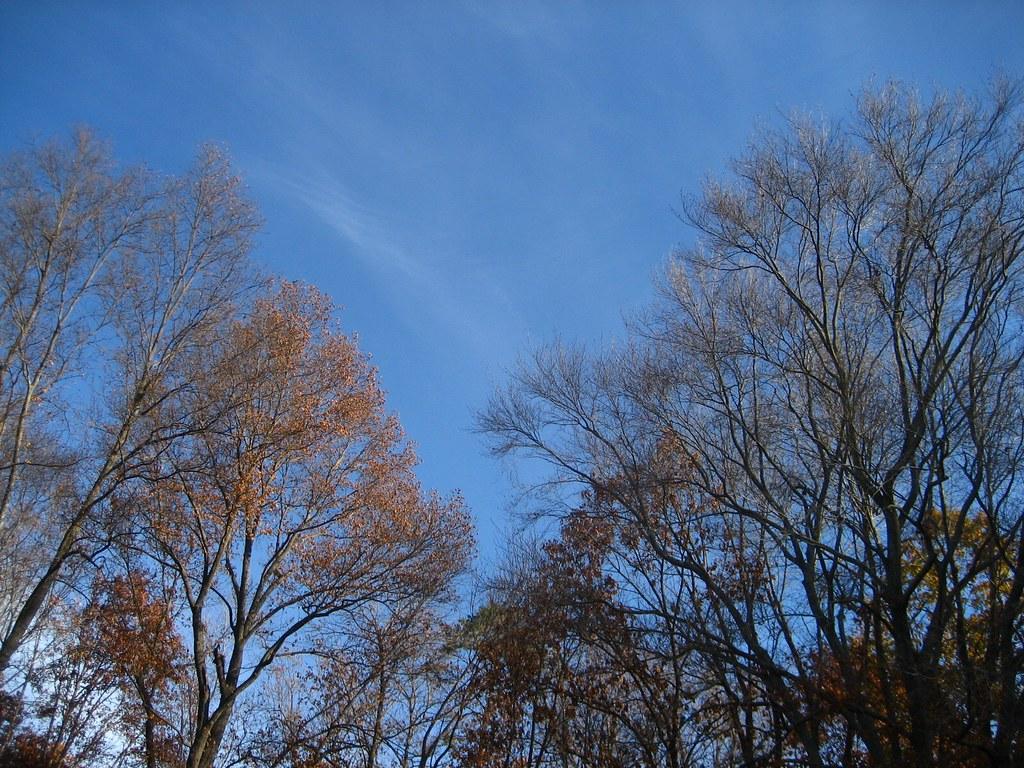 Saturday Sky 20071124-3