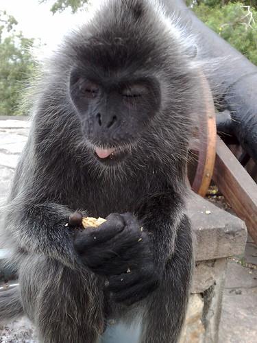 Monkey feeding.