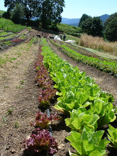 Organic Agriculture at the divine mountains of Oregon por billybuck.