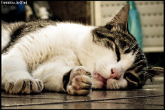 Frias.... (Fernando Delfini) Tags: vacation cat relax other holidays time photos sleep sopaulo kitty things more sampa gato fernando dormir sono ferias descanso delfini aplusphoto