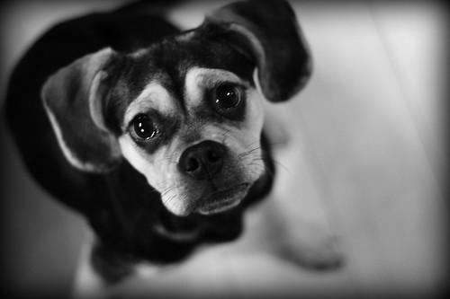Zu Dog par Shelby Nycole of 927Photography.com