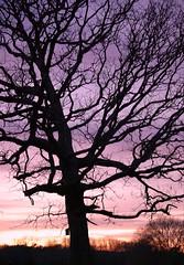 The End of December (NetSerf) Tags: pink sunset shadow sky color tree nature ilovenature december purple pentax tennessee birdhouse serene tranquil refuge hiawassee vob k10d pentaxk10d bestnaturetnc07