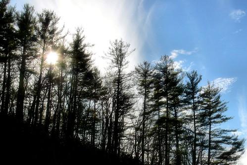Sunlit Silhouettes