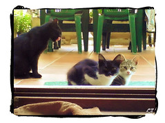 Aquellos tiempos... (aunqtunolosepas) Tags: family pet cats pets cute animal animals familia cat kitten feline funny bea brothers kitty kittens gatos cutie gato kitties gata felinos felino felines animales cachorros lovely cuteness gatitos mascota mascotas hermanos cachorritos catspotting bestofcats aunqtunolosepas goldstaraward
