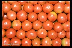 Mercado Municipal de Campinas - tomates (fabio teixeira) Tags: brazil brasil fabio mercado campinas tomate municipal teixeira nufca fabioteixeira