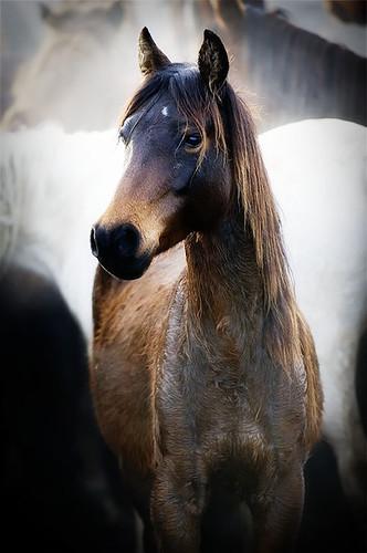 gathering mares 285