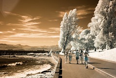Another Infrared shot from the archives (Mark Demeny) Tags: leica m8 infrared leicam8
