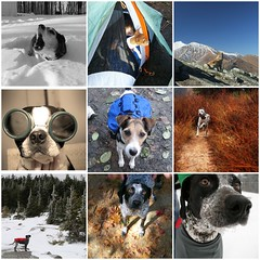 Dogs that Inspire