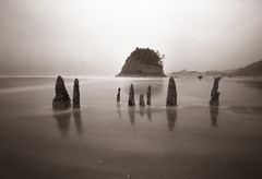 On the outskirts of the Neskowin Ghost Forest, 60 seconds (Zeb Andrews) Tags: ocean trees beach oregon coast landscapes seascapes pinhole pacificocean pacificnorthwest duotone neskowin zeroimage zero69 proposalrock bluemooncamera zebandrews pinscapes sowhathappenswhenatreesfallsatthebeach andnooneisaroundtohearit zebandrewsphotography
