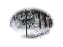 Snow Viniette