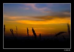the end of day (Mariusz Petelicki) Tags: sunset thankyou poland polska zachd hugsandkisses canon400d mariuszpetelicki thegoldproject