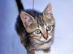 In giovent (RoLiXiA) Tags: cats animals felini gatti animali yashicafx3super2000 gggears