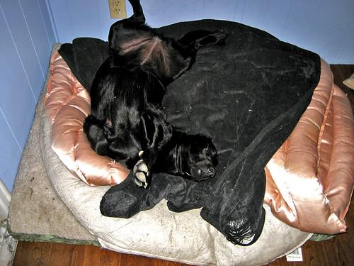 maisie sleeps