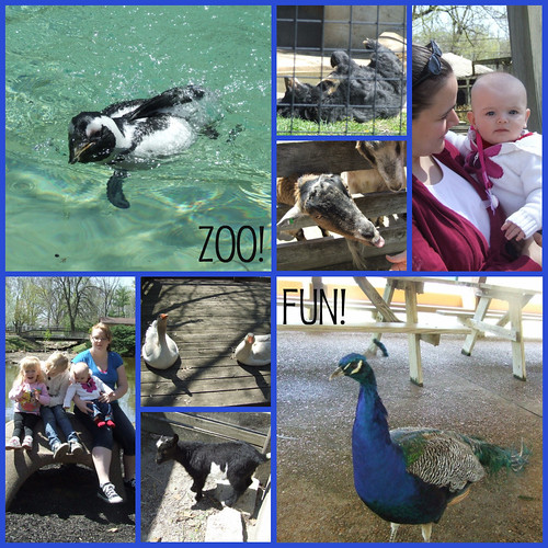 zoocollage