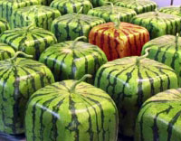 square-watermelons.jpg
