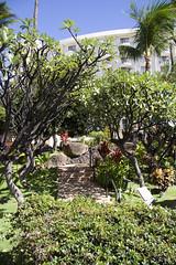 Westin (Maegs) Tags: hawaii mauihawaii