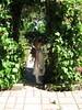 Tatianna's Garden