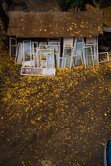 Fall'en Art. (Sakuto) Tags: autumn roof fall window colors leaf view