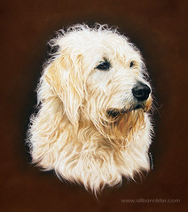 Ed (Ali Bannister) Tags: portrait dog painting ed pastels labradoodle commission noble
