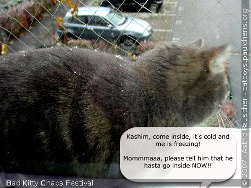 Bad Kitty Cat Festival Of Chaos No.18 - 05